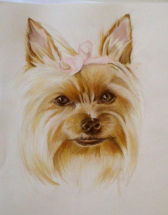 Custom Pet Portraits Yorkie Yorkshire Terrier Colored Pencil