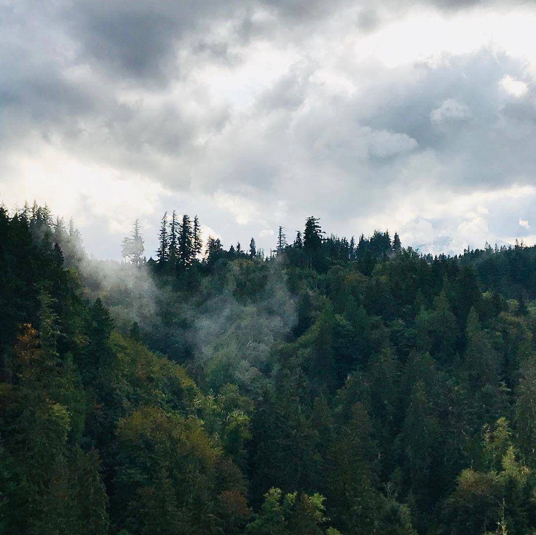 First sign of rain in Seattle this past weekend ... and we can finally see the sky again. Hot damn. Went looking for rainclouds at Snoqualmie and had oodles of fun in the process, just watching the #mist wreath itself around the trees. . . . #pnw #pnwlife #pnwlove #pnwadventures #pacificnorthwest #snoqualmiefalls #washingtonexplored #mist #moodygrams #moody_tones #outdoors #outdoorphotography #nature #naturephotography #photofun #shotoniphone #ourfotoworld #ig_captures #raw_allnature #raw_commun