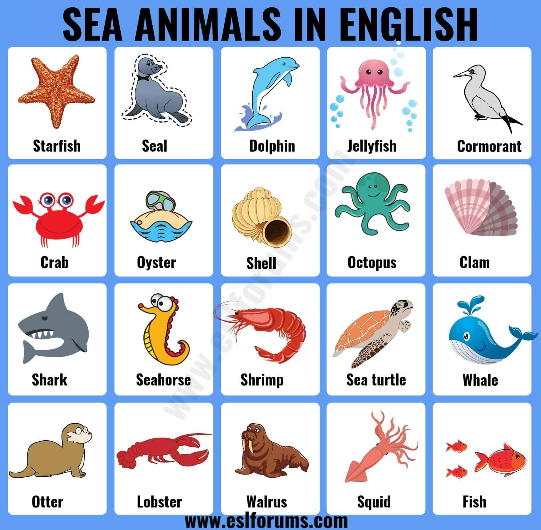 Sea Animals List Of 20 Interesting Sea Ocean Animals With The Picture Esl Forums Ocean Animals For Kids Sea Animals Ocean Animals [ 1720 x 1758 Pixel ]