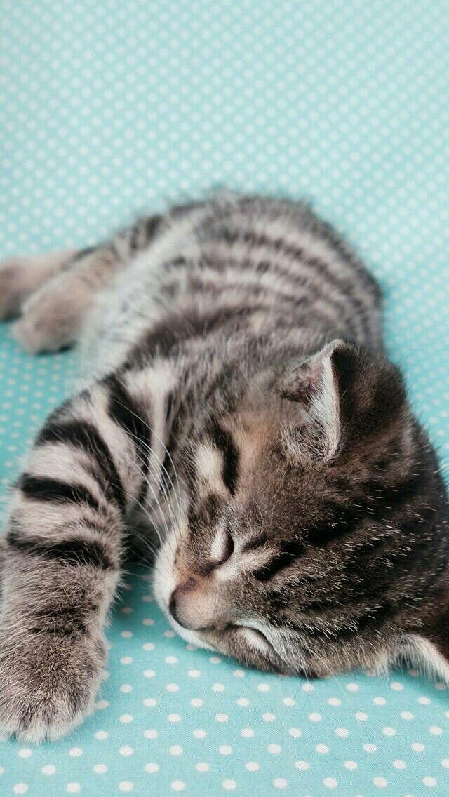 Little Baby Kitten Sleeping Sooo Cute Baby Katzen Susse Tiere Katzen