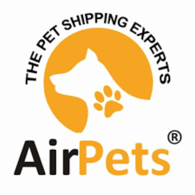 Pin On Pet Moving Services In Bangalore