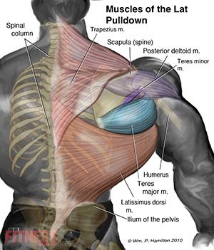 growing 'back wings' with reverse-grip pulldowns | fitnessrx for, Muscles