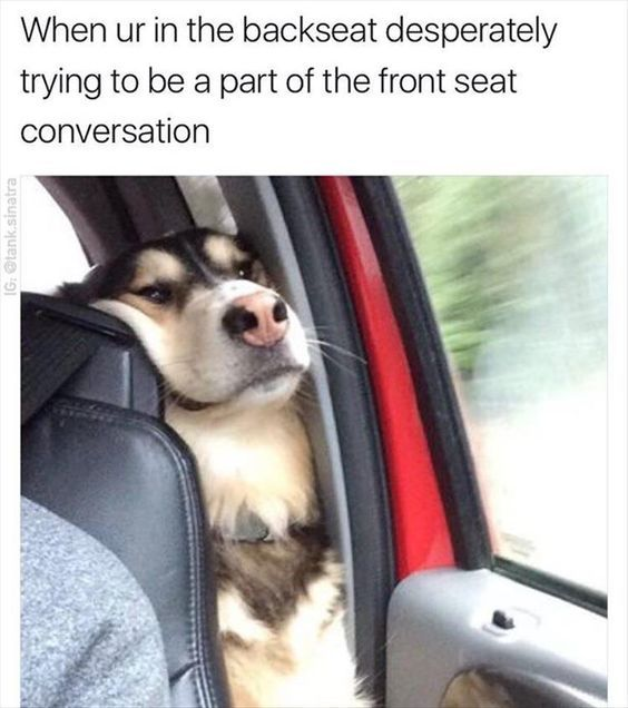 Funny Dog Between Car Seat