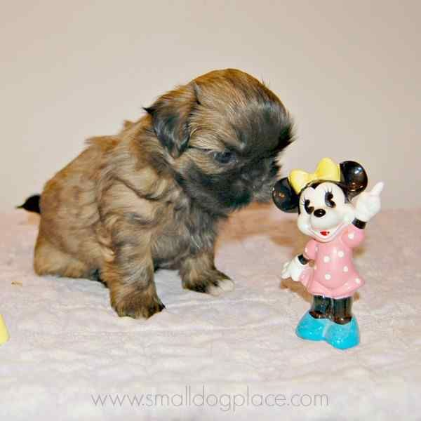 Disney Dog Names For Girls For All You Mickey Fans Girl Dog Names Dog Names Disney Girl And Dog