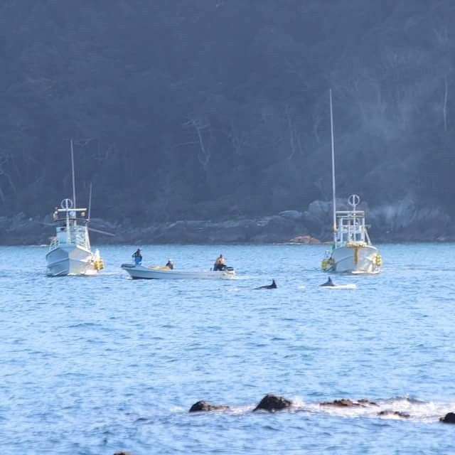 This is not looking good banger boats around soon in the cove, looks doomed. #tweet4taiji #dolphinproject #tweet4dolphins #coveguardians