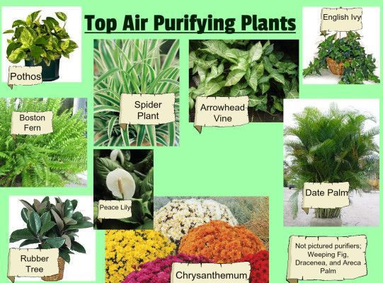 Air Purifying House Plants To Get Rid Of Toxins Indoor
