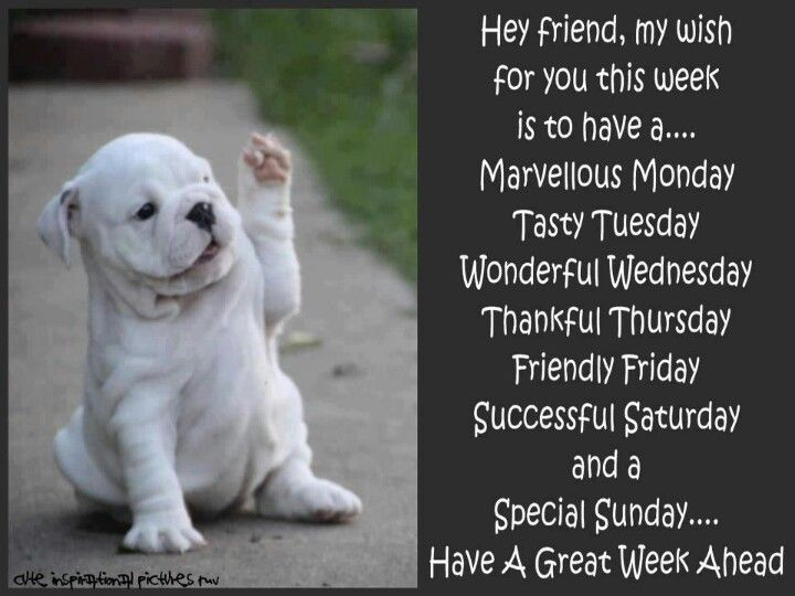 Image result for great week ahead pet images