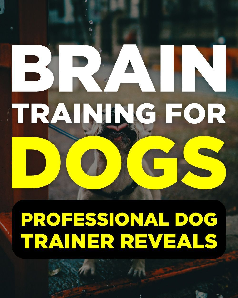 Hottest Screen Brain Training For Dogs Review Thoughts The usage of a dog kenn  Hottest Screen Brain Training For Dogs Review Thoughts The usage of a dog kenn