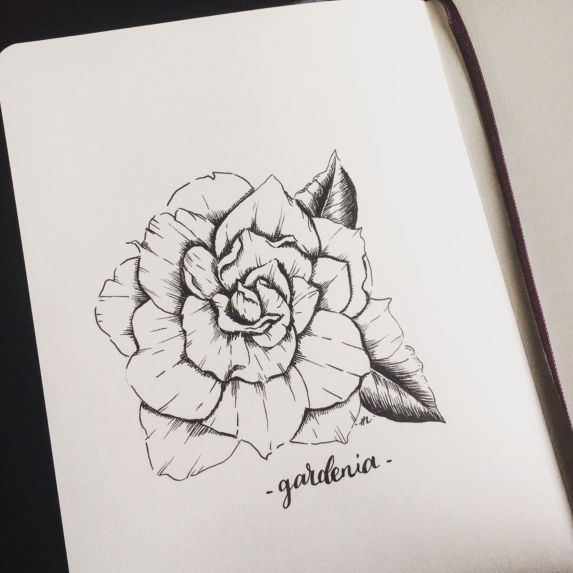 Flower Art Ink Drawing Gardenia Illustration Flower Prints Art Flower Art Flower Tattoo Drawings