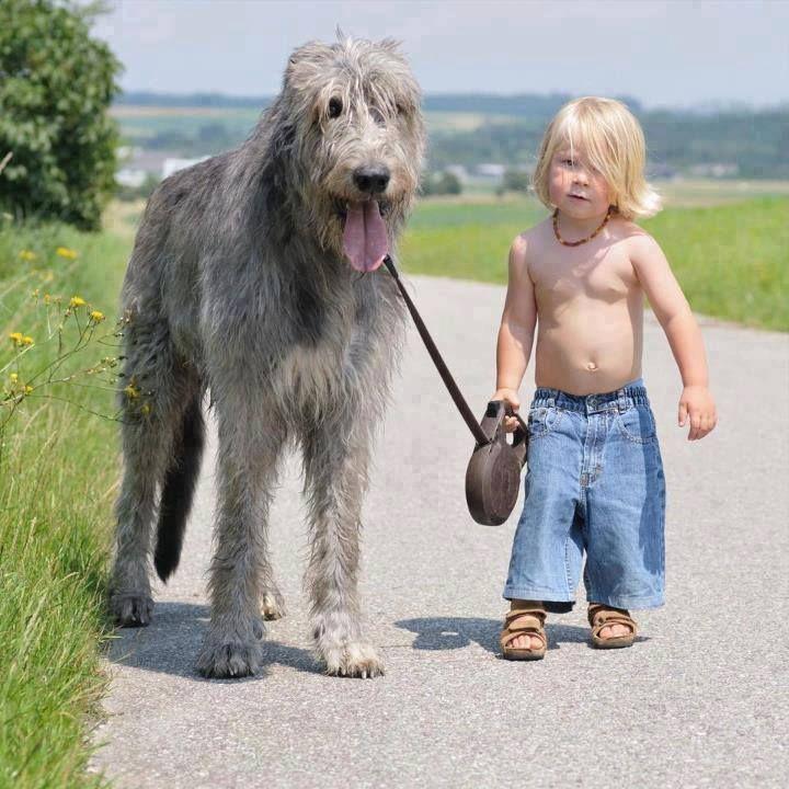 Pin by jan crocker on i am woman a dogs purpose big