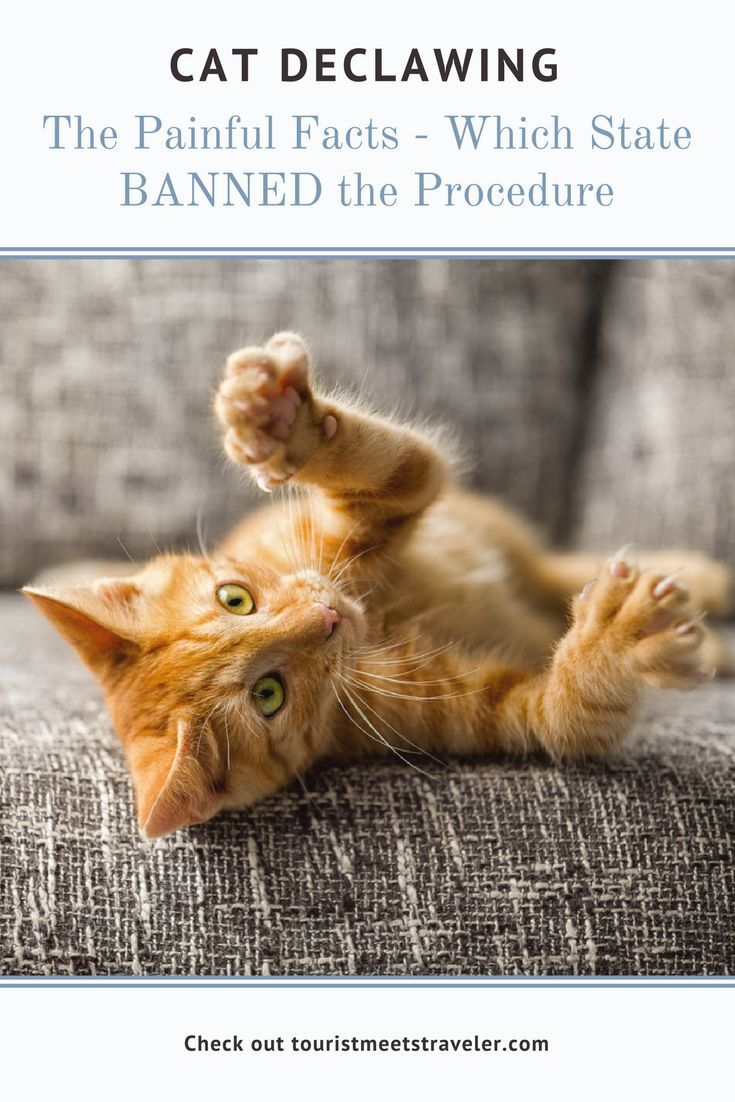 Cat declawing the painful facts including which state