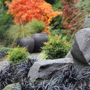 Rock Garden Ideas With Boulders And Black Mondo Grass , Natural Rock Garden Ideas In Garden And Lawn Category