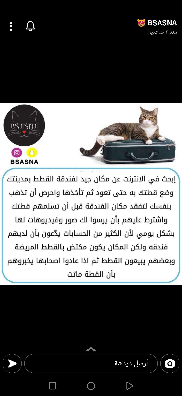 Pin By Sana Azhary On Cats In 2021 Pole Cats