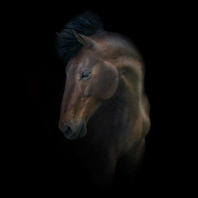 Irene Kung can take an amazing photo of a horse.