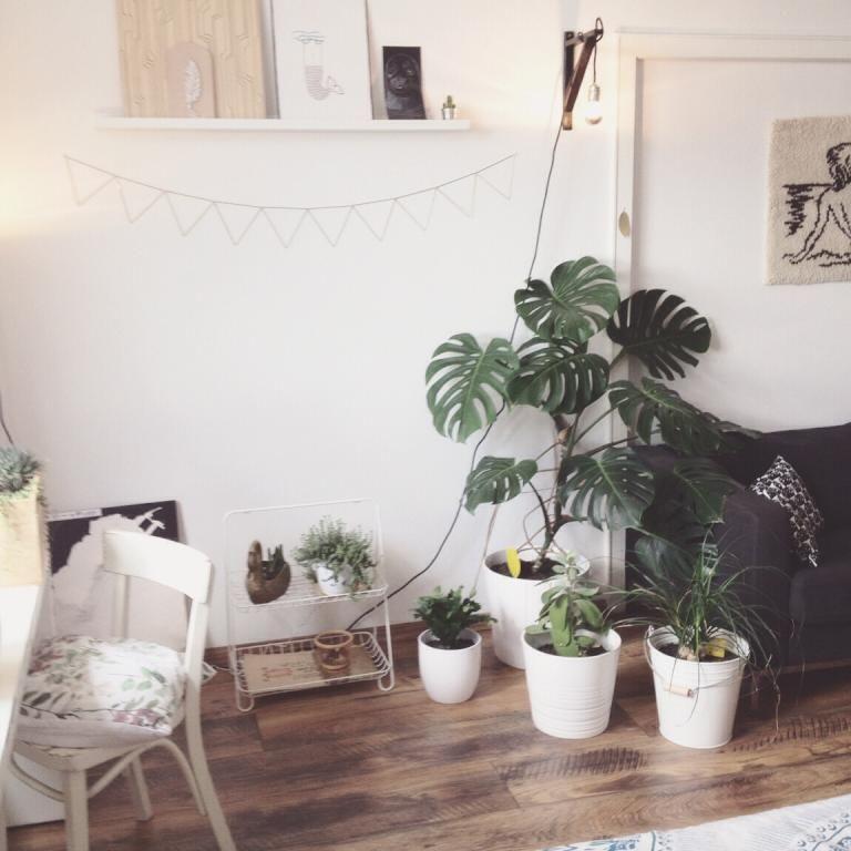 Fesselnd Grüne Pflanzen Sorgen Für Ein Gutes Raumklima Und Tun Der Seele  Gut. #Sommer