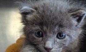 Kitten at APA! Bottle Babies Kittens, Newborn kittens