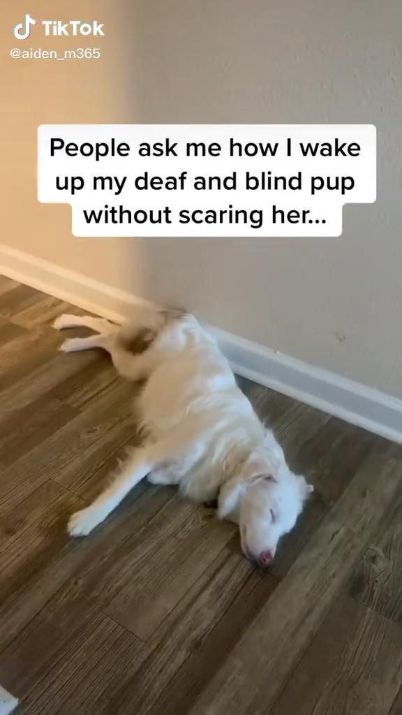 ‪The way he wakes his deaf and blind dog � up is pure � #spiritbath‬