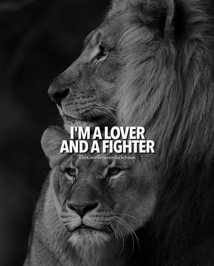 Action Leeuwen I'm A Lover And A Fighter. | Quotes That I Love | Lion