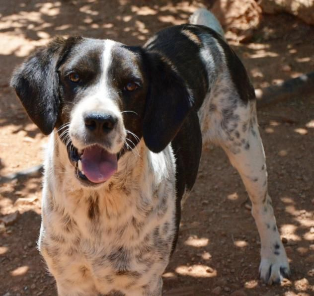 Adopt Gillian On Dog Spay Dog Facts Dogs