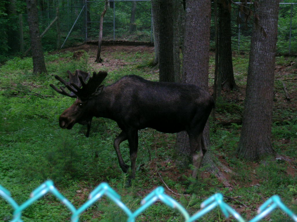 Maine Wildlife Park (Gray) 2019 All You Need to Know