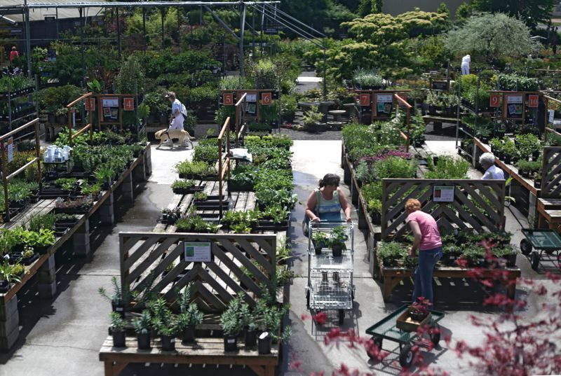 By Tribune Photo Jonathan House Pers Check Out Native Plants At Portland Nursery