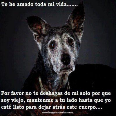 Memes De Perros Con Mensajes De Amor Google Search Perros Frases Mascotas Perros Viejos