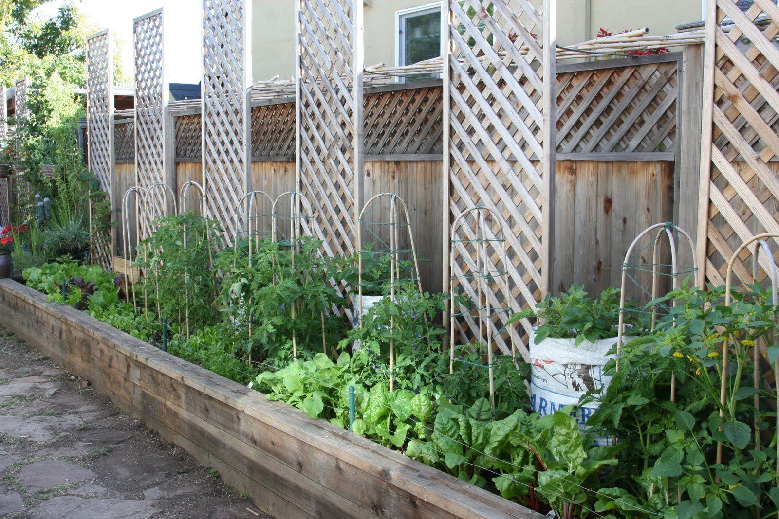 Raised beds along a fence Backyard