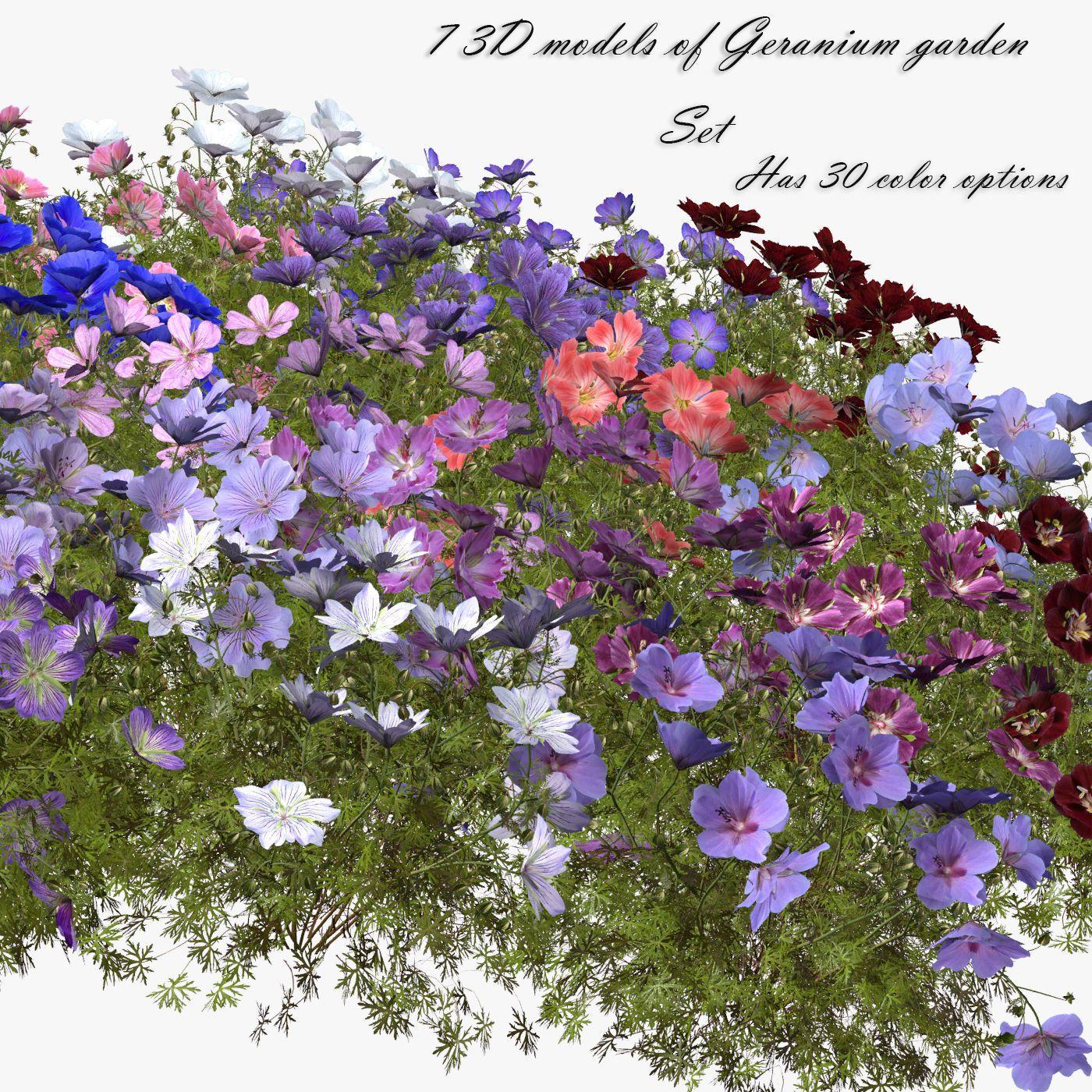 Flower Geranium Garden 3d Model Rasteniya Modeli