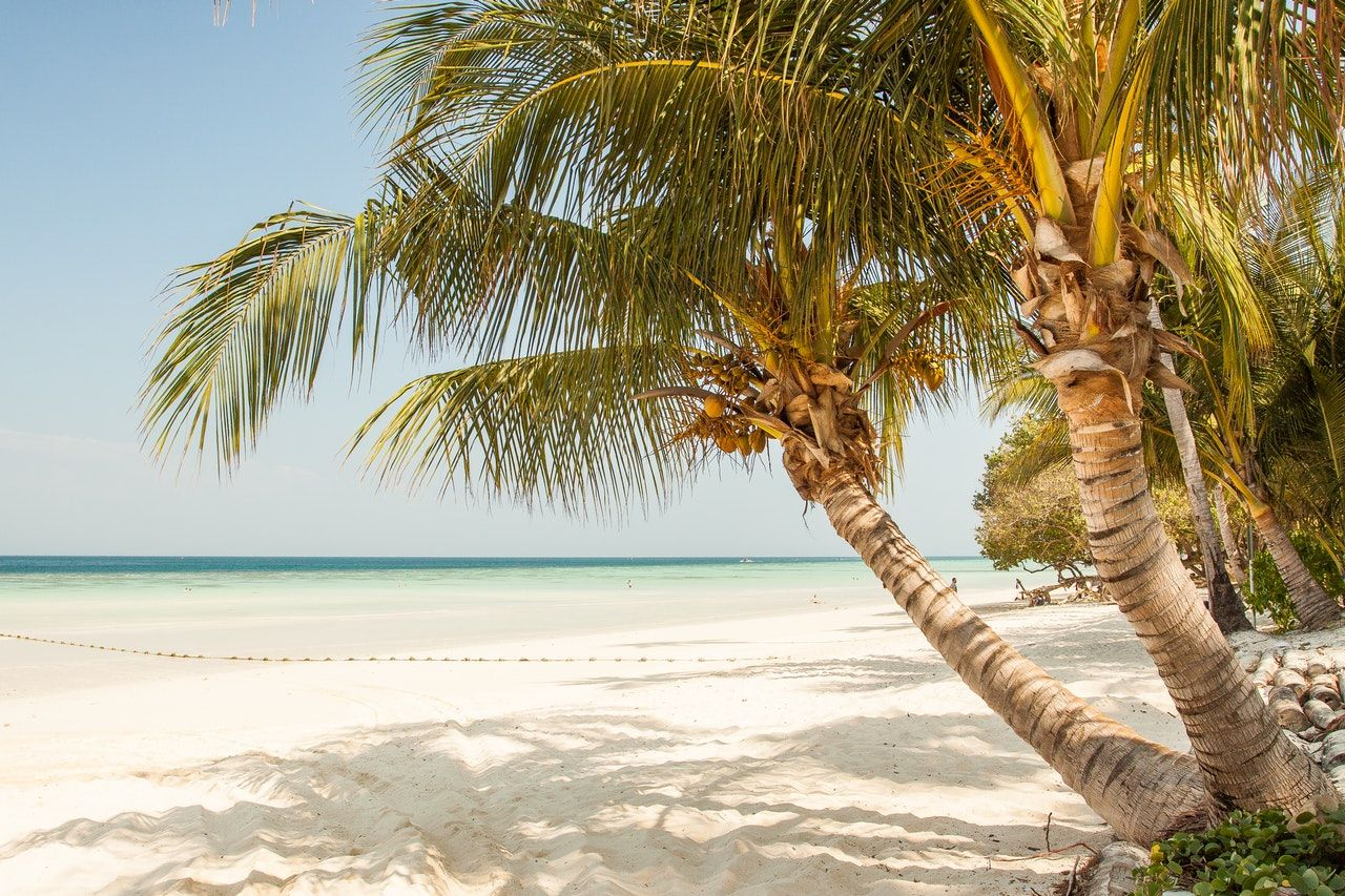 Tropical Wanderlust Vinyl Decal #beachlife Travel Palm Trees Beach Vinyl Decal