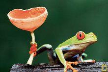 Aves - Papéis de Parede - National Geographic Brasil
