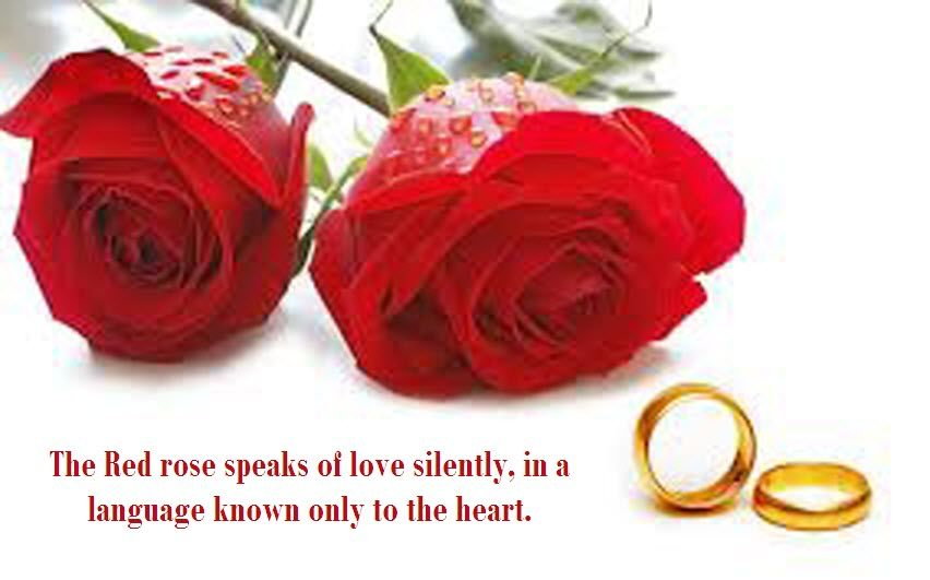 Red Rose Love Quotes Latest Most Beautiful Red Rose Pictures With Enchanting Rose Quotes Love