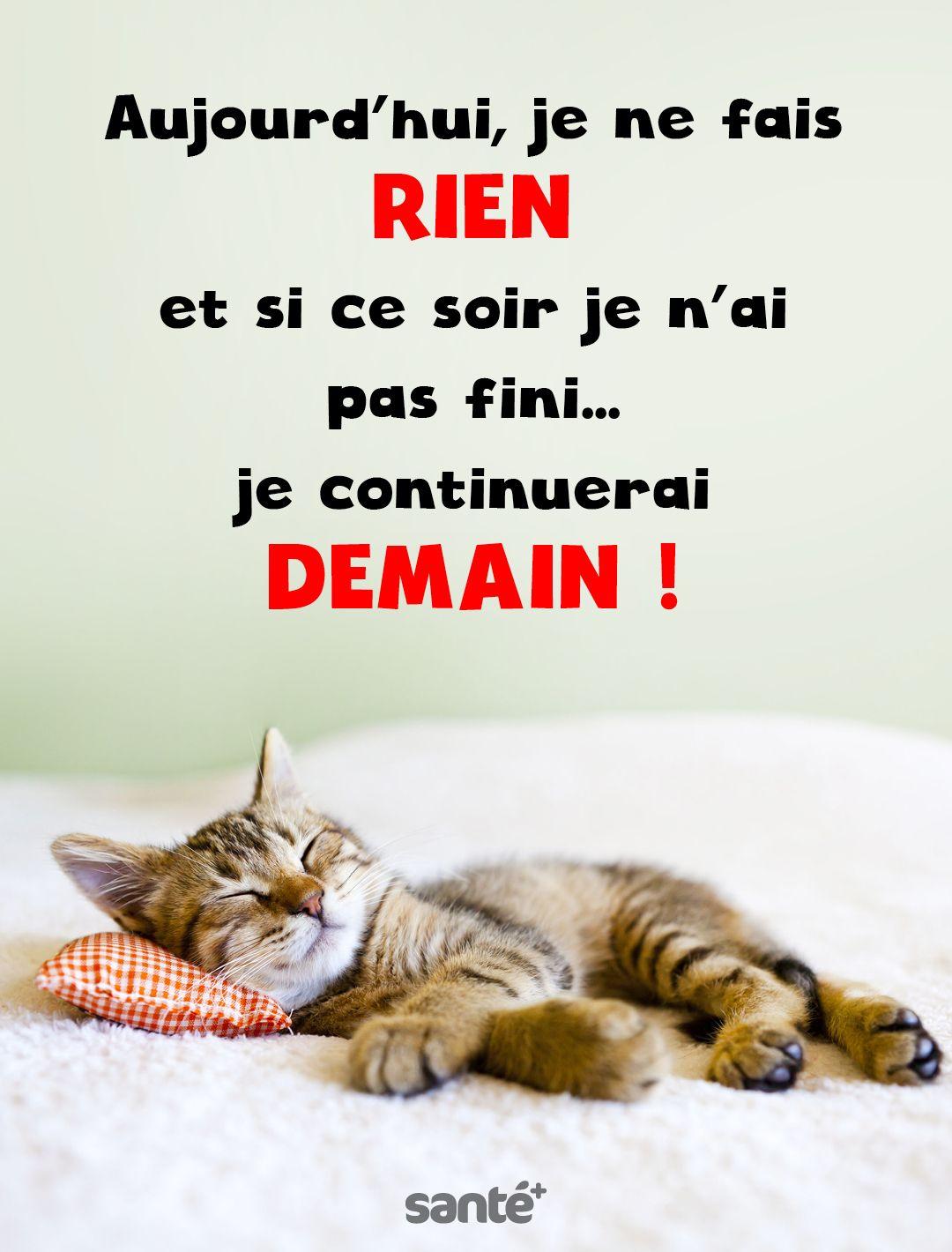 Image Citation chat de Djamel julien du tableau Dj. évasions | Photos de chats rigolos, Blague chat