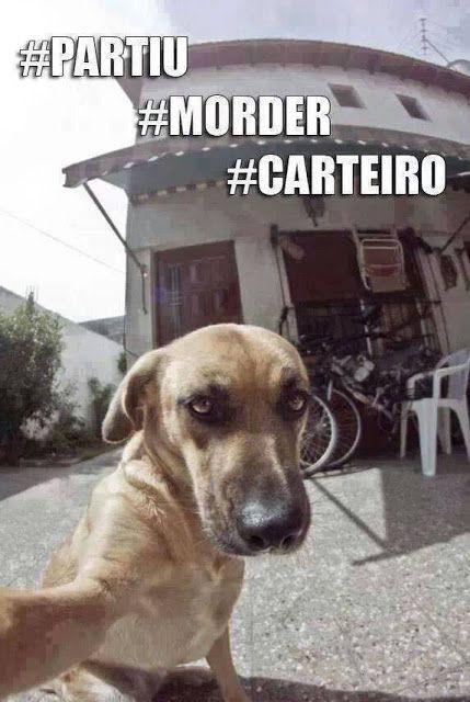 Cachorrinho radical! Com essa selfie vai bombar! Morde o carteiro lá totó! Veja o post completo: http://boo-box.link/27D5V   #whatsapp   #zzz   #humor   #selfie   #dog   #instadog