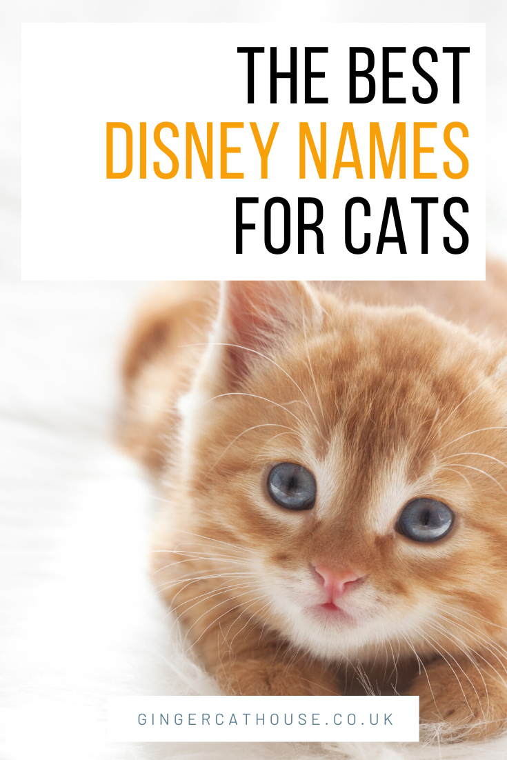 100 Disney Pet Names Disney Pet Names Disney Cat Names Pet Names