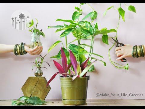 1874 Kiedy I Jak Rozmnazac Rosliny Doniczkowe Podstawowe Zasady Rozmnazania Roslin Domowych Youtube Healthy Plants Plants Green