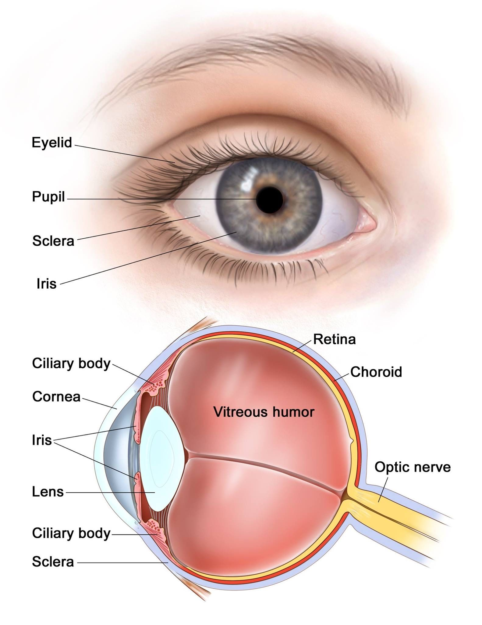 Vocabulary  The Eye  U2026