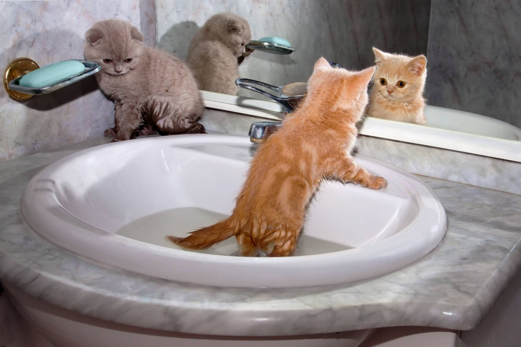 How To Give A Cat A Bath Purrfect Love Newborn Kittens Cat Care Kitten Care
