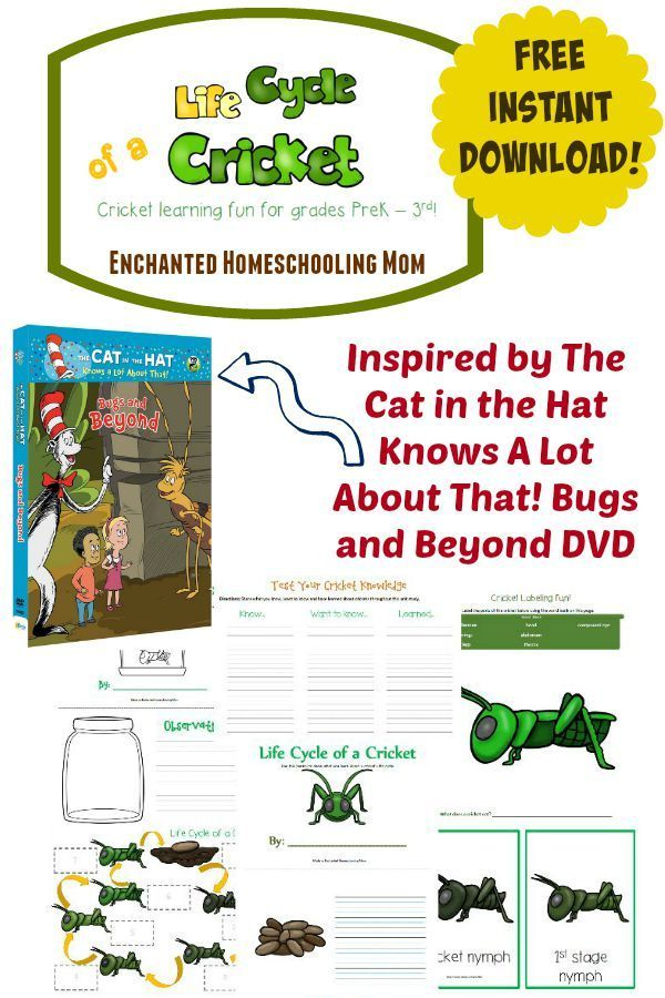 Make Learning All About Crickets Easy With My New Free Pack That Helps Your Children Learn All About The Life Cycle Insect Activities Life Cycles Fun Learning