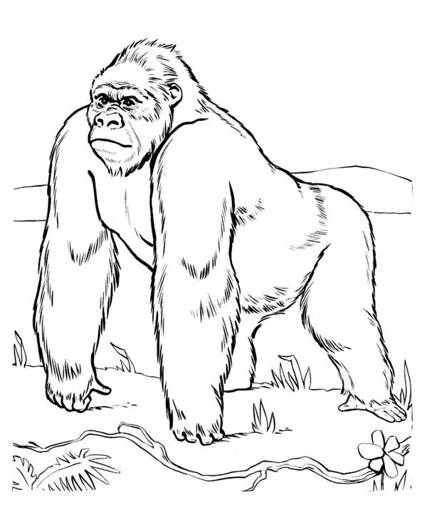 Gorilla in the Meadow Coloring Page  Free  Printable Coloring
