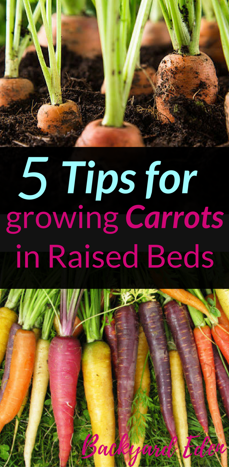 5 Tips for Growing Carrots in Raised Beds Growing