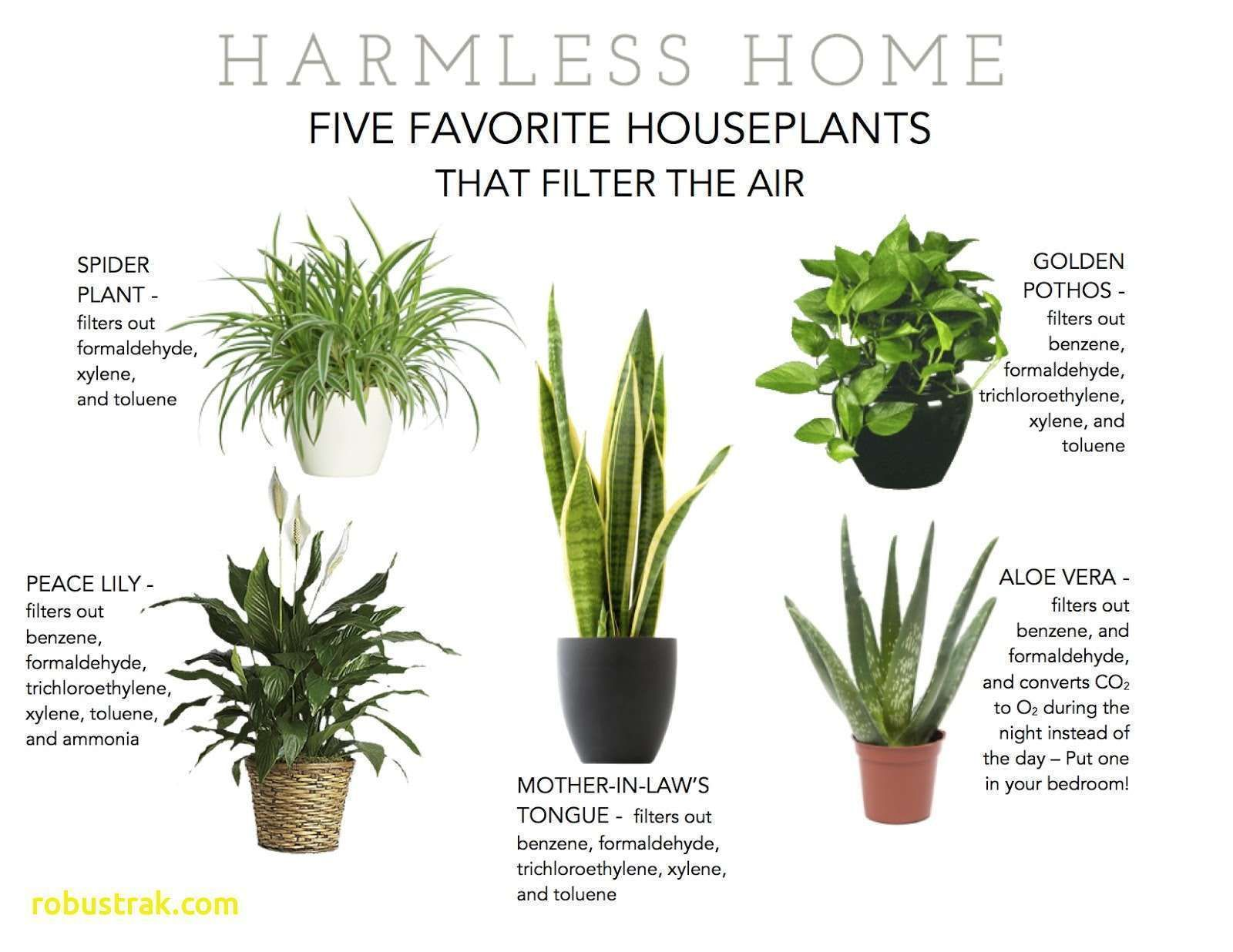 Hanging Indoor Plants Plants Best Air Purifying Plants Best
