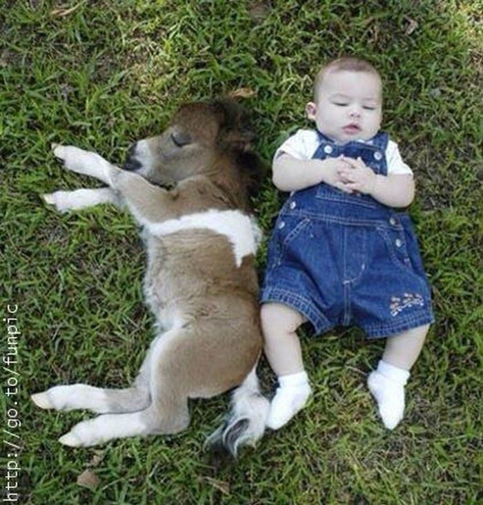 Looks like the dwarf donkeys are winning everyone's hearts lately. These adorable creatures are same height as toddlers, are playful and love cuddles. What more could you want. Here is a few …