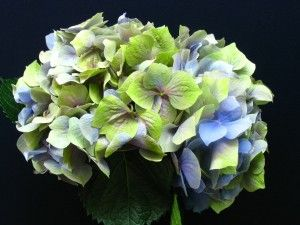 Hygranga Wedding Flowers