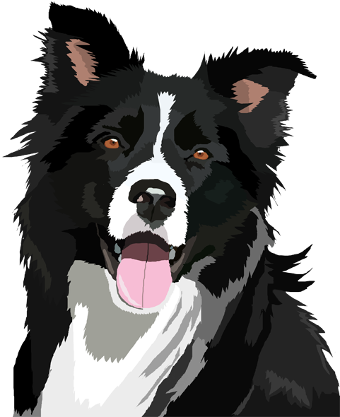 image result for cartoon border collie animal lovers