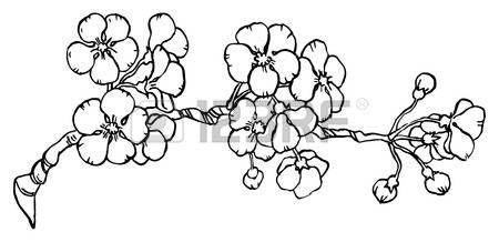 Dessin Fleur De Cerisier Cerisier Ou Japon Sakura Branche En Fleur