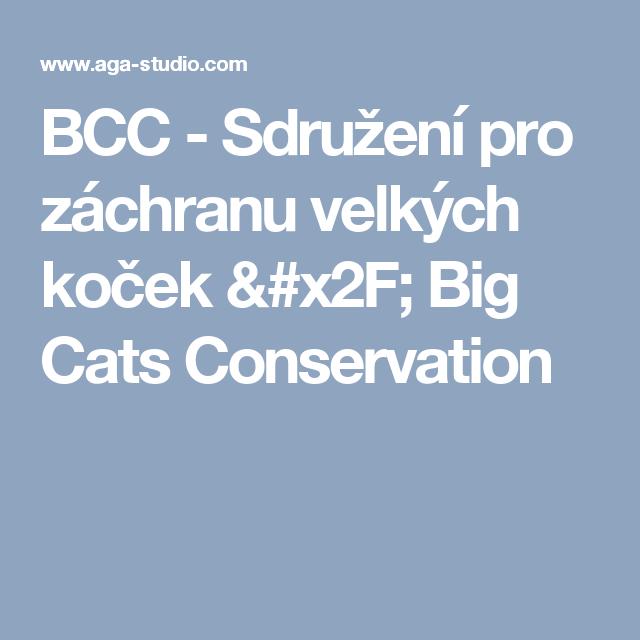 obrázky velkých kočiček