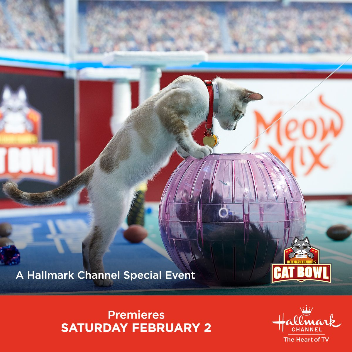 Did You Miss Swirl S Amazing Plays During Kitten Bowl V Relive The Pawsome Moments Again Anytime On Our Hallmarkchannel Co Kitten Bowls Kittens Kittens Cutest
