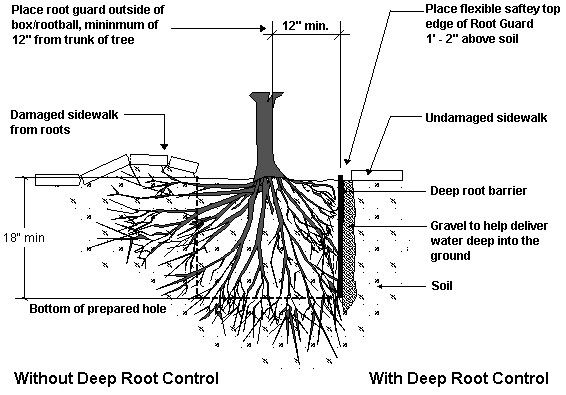 Protect Your Hardscapes With Root Barriers