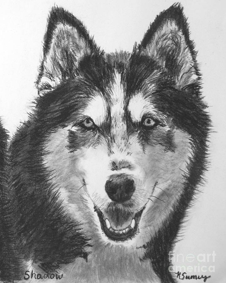 Siberian Husky Drawings For Sale