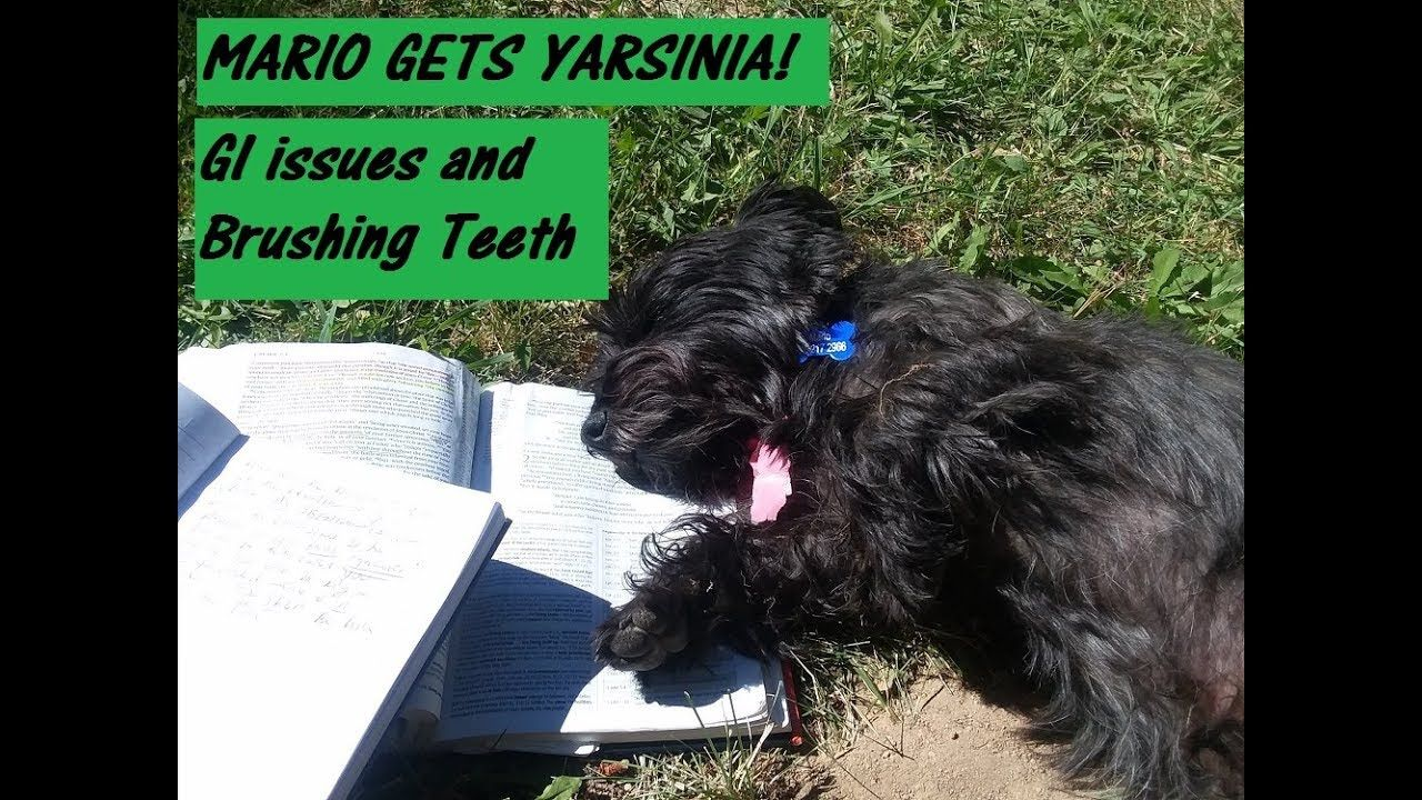 My Dog And Yarsinia Bacteria Beware Dogs Pets Animals